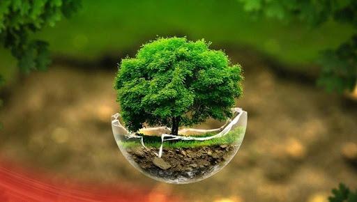 آموزش؛ کلید نجات محیط زیست